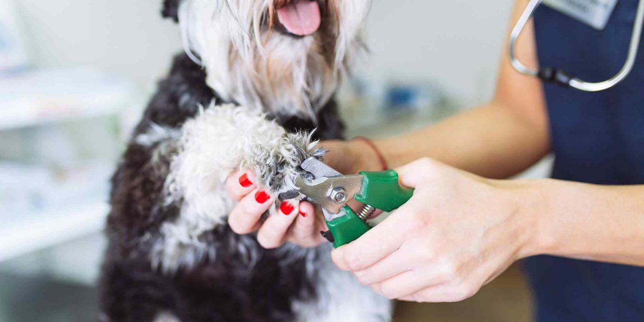 How to Choose the Perfect Groomer?