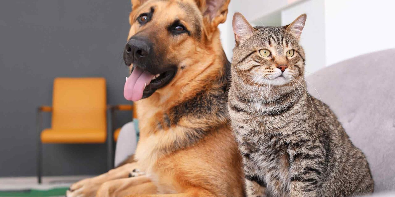 Keeping Your Pet Active Year-Round