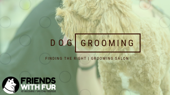 How to select the right Grooming Salon
