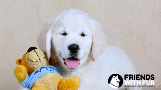 Puppy Groom – At What Age Can I Start Getting My Puppy Groomed?